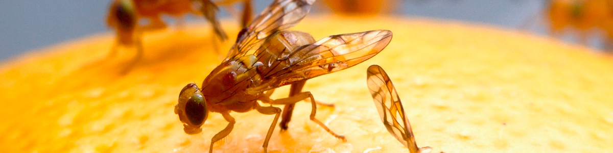 Control de Plagas en la Industria Alimentaria